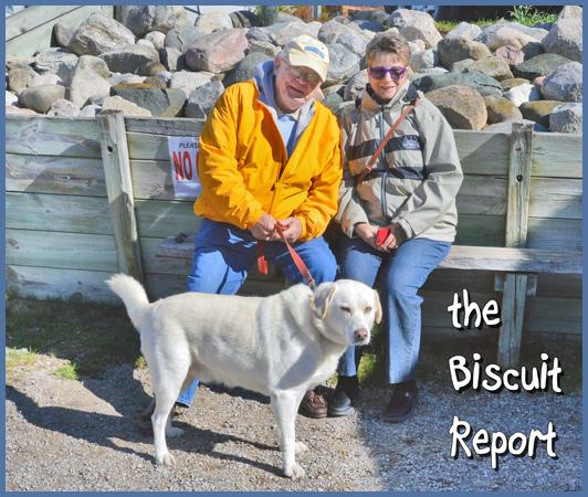 Biscuit10-14-15