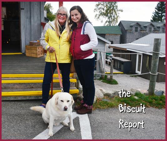 Biscuit10-15-15