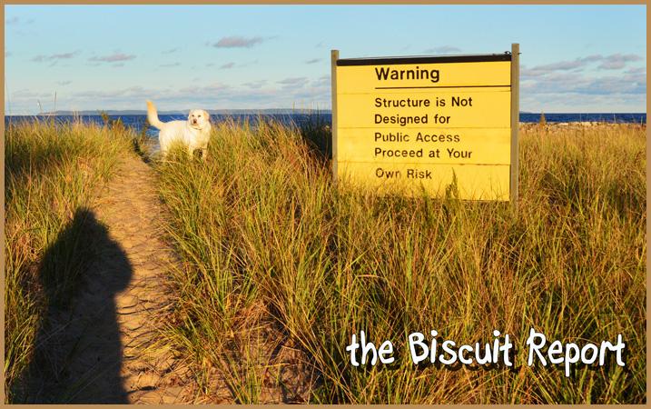 Biscuit10-7-15
