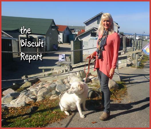 Biscuit11-3-2015