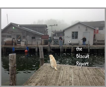Biscuit6-15-15[1]