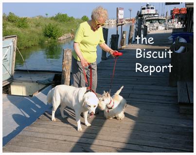 Biscuit6-28-14[1]