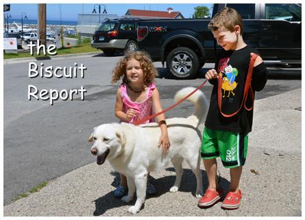 Biscuit7-1-14[1]