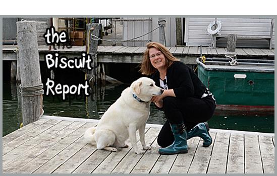 Biscuit7-13-15