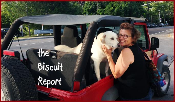 Biscuit8-11-15