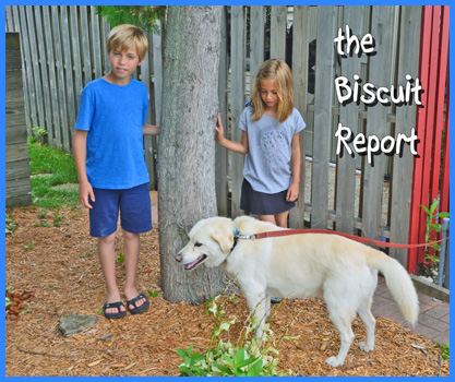 Biscuit8-19-15a