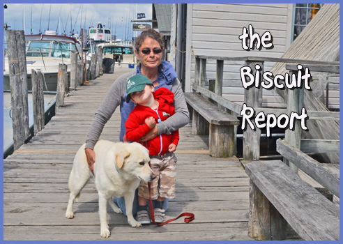 Biscuit8-21-15a
