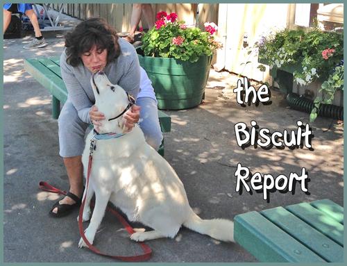 Biscuit8-5-15