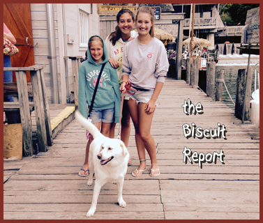 Biscuit8-7-15