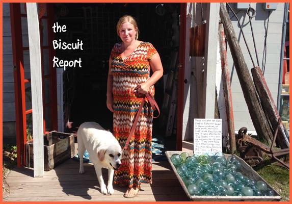 Biscuit9-9-15