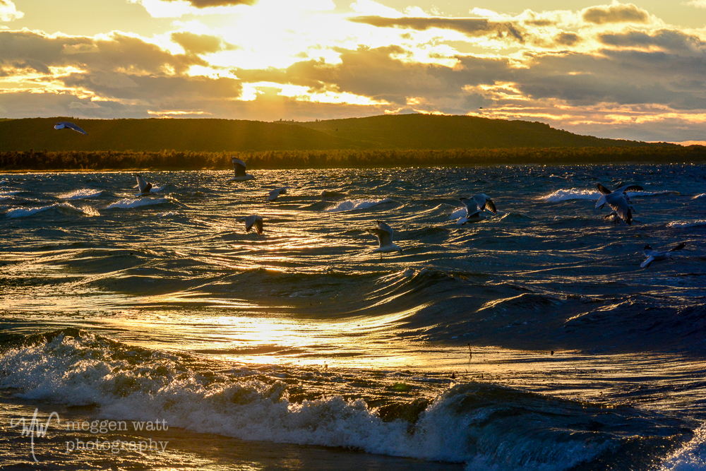 Fall Color Good Harbor Waves And Gulls-8886