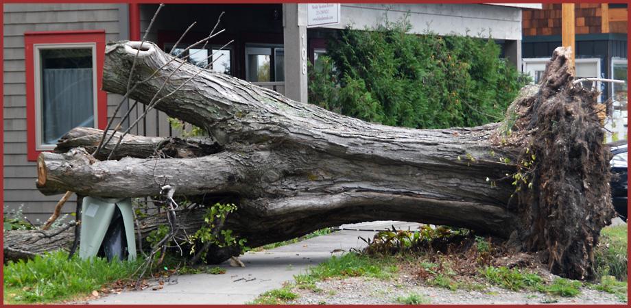 Treestump9-27-2015